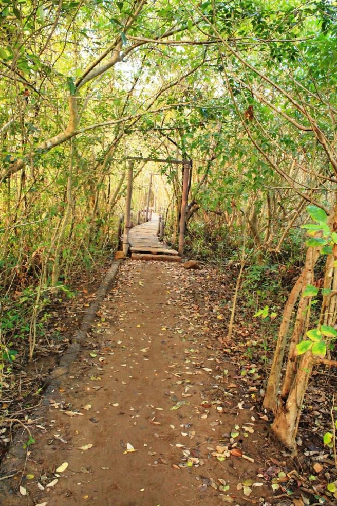 mongrove walkway